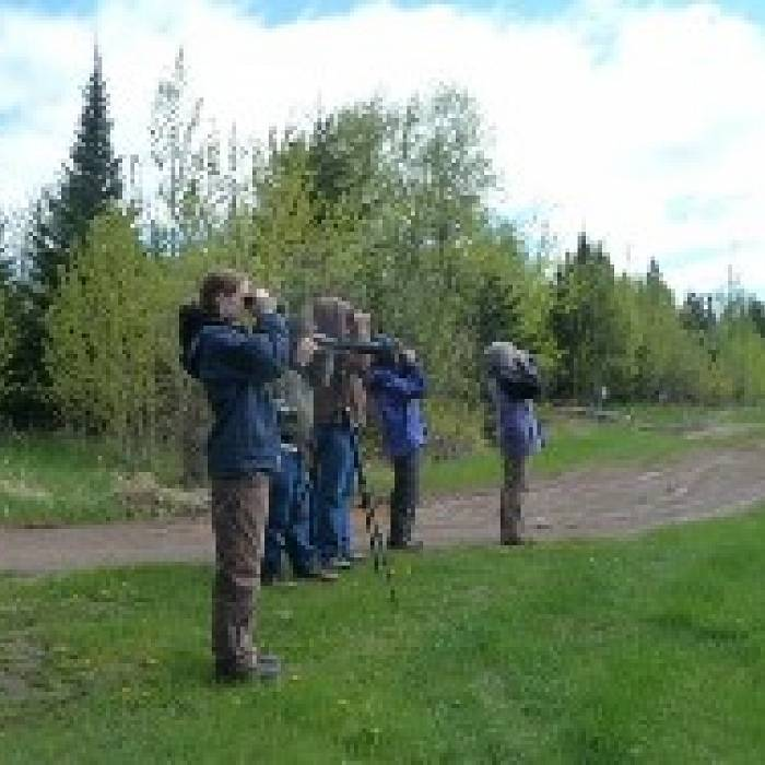 Gunflint Trail Spring Birding Experience: Up the Trail